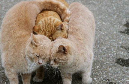 现在终于知道猫咪之间是如何交流的啦!