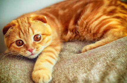 猫咪突然去猫窝拉尿,猫咪在猫窝撒尿怎么办