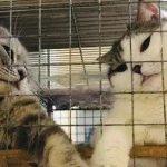 俩猫在家里乱尿被关禁闭,谁知竟然…