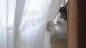 你被猫咪偷窥过吗?它们都藏在哪?