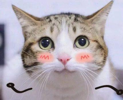 5个关于猫咪的冷知识,看看你们都知道吗?