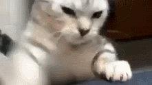 猫咪跟铲屎官的手打架,打了半天发现打不过