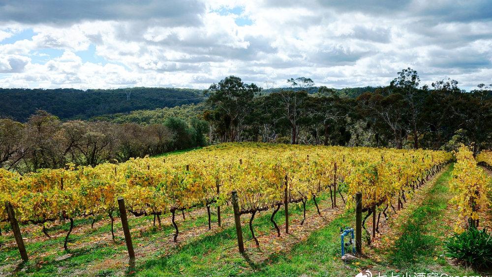 葡萄酒迷手册:巴罗萨谷和南澳