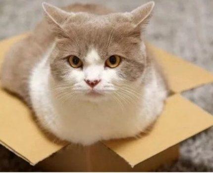 盒子放久了,真的会长出猫来!