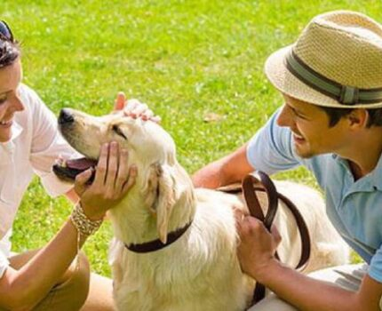 如果狗狗晕车怎么办?