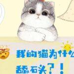 震惊🤯!猫为什么酷爱舔石头?