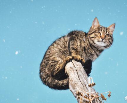第五十夜—猫咪的智商颠覆你的想象