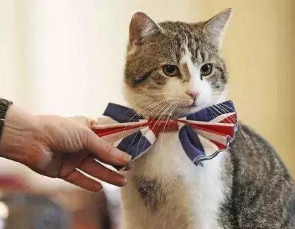 最有身份的四只猫,国家领导人都为它们铲屎