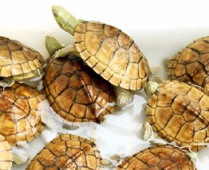 节日要外出旅游,那我们的龟咋办?