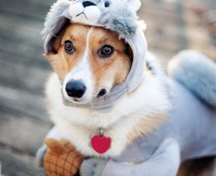 狗狗VS主人:你怎么就不懂我的心?