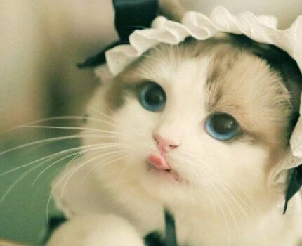 猫咪医药大杂烩