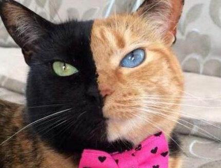 """你听说过""""玳瑁猫""""吗?"""