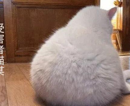 《今日喵说法》:还猫一个公道!