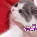 咬紧牙关不肯吃药的小猫咪,委屈到哭出来~