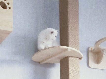 猫墙安装要点和步骤技巧