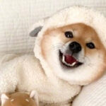 你知道自己适合养什么狗狗吗?