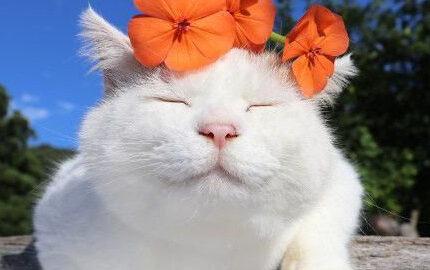 关于猫咪的6大谣言,哪条你听过?