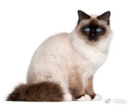 十个关于猫的冷知识
