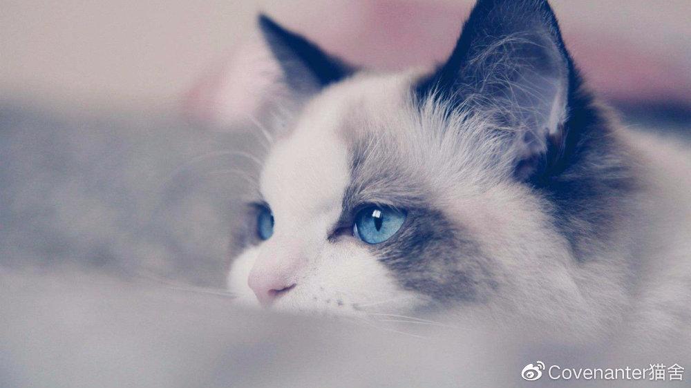 如何接生新生小貓和照顧(上)