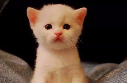 猫:我把jiojio吞掉了,怎么办??