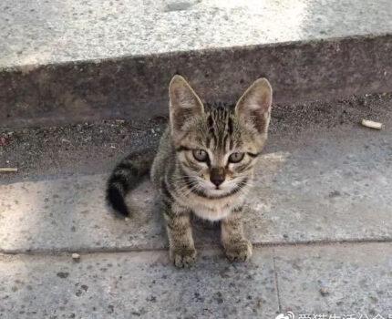 我最艰难的日子,是一只猫收留了我。
