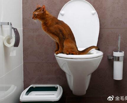 训练猫咪用马桶是一件很炫酷的事吗?