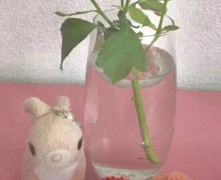 小白兔和糖果铺