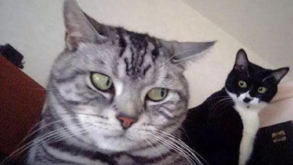 猫片精选:小猫咪生气了,很不好哄的那种!