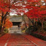 金秋十月带你走进日本,感受长寿国的奥秘