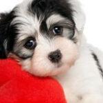 呆萌的狗狗——人类最真诚的伙伴