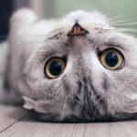 """训练猫咪学会""""不要动"""""""