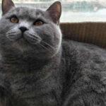 猫咪被绝育后,真的会记仇铲屎官吗?
