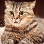 """训练猫咪学会""""趴下"""""""
