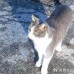 猫,是如何理解死亡的?