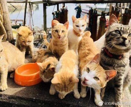 宠物趣闻 | 带你走进「爱猫之城」