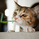 第六十六夜—爱打呼噜的小猫咪