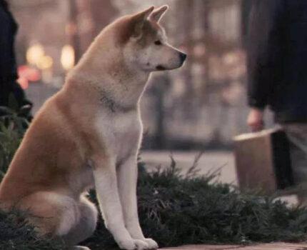 狗狗一生的陪伴