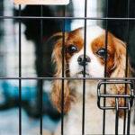 上班族该不该养狗?