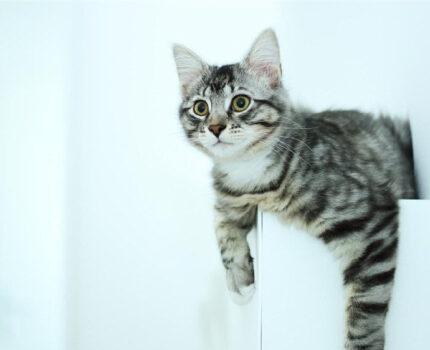 让猫咪喜欢上玩玩具