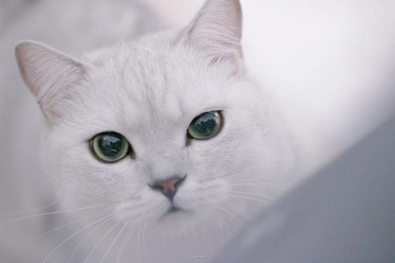 9月影像︳真 ● 招财猫原来长这样