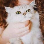 """""""我给猫喂了伏特加,这次绝对红!"""""""