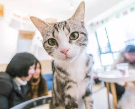 在开猫咖狗咖之前,派派我有5条建议…