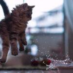 """""""猫为什么害怕黄瓜?""""真相竟然是..."""
