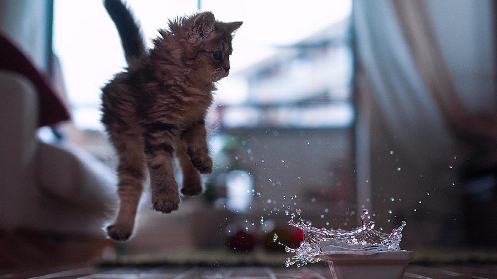 """""""猫为什么害怕黄瓜?""""真相竟然是…"""