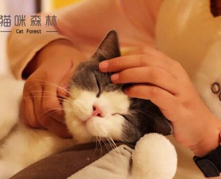 在猫咪森林让你吸到最可爱的小猫咪