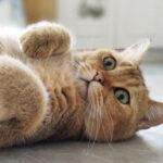 沉迷吸猫,逐渐上头是种怎样的体验?