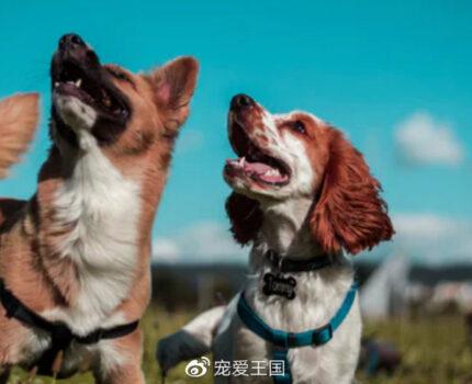 狗狗和人一样,需要外出,需要看看这个世界