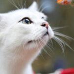 猫咪信任人的表现有哪些