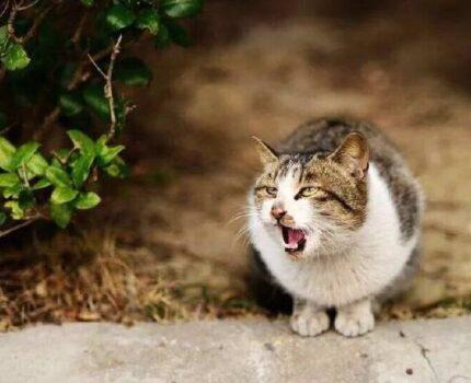 猫猫不小心吃了脏东西怎么办?