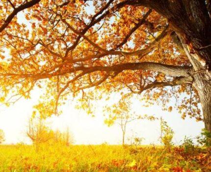 一棵坚韧繁茂的大树